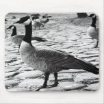 Canadian Geese Near The Lake Mousepad
