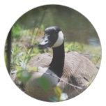 Canadian Geese Nesting Plate