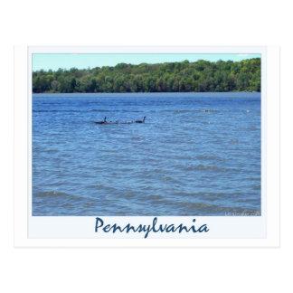Canadian Geese on Shenango Lake Postcard