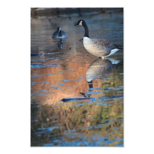 Canadian Geese Photo Enlargement