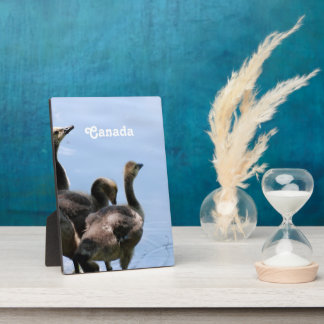 Canadian Geese Photo Plaque