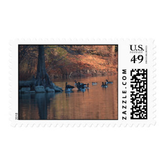 Canadian Geese Postage