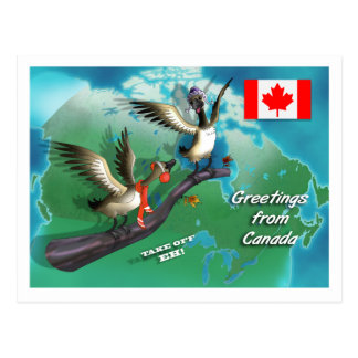 Canadian Geese Postcards