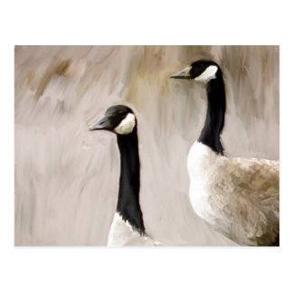 Canadian Geese Post Cards