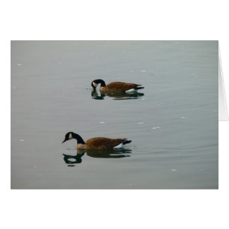 canadian geese reflections card