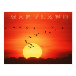Canadian Geese silhouetted against fiery sunrise Postcard