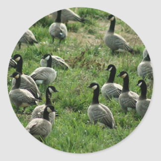 Canadian geese stickers