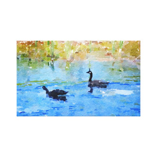 Canadian Geese Swimming Canvas Print