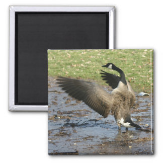 Canadian Goose 2 Inch Square Magnet