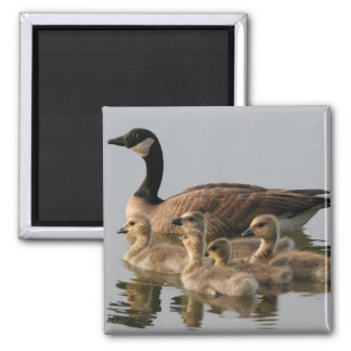 Canadian Goose and goslings Geese 2 Inch Square Magnet