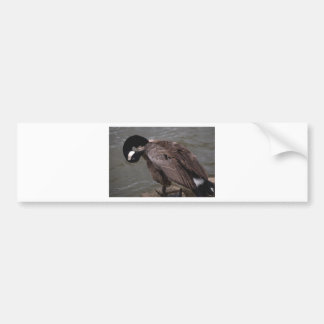 Canadian Goose Bumper Sticker