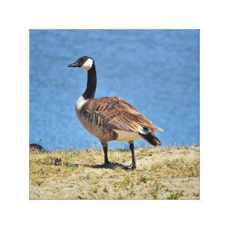Canadian Goose Canva Wrap Print