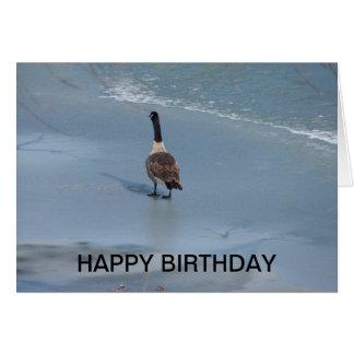 Canadian Goose & Cardinal, Birthday Card