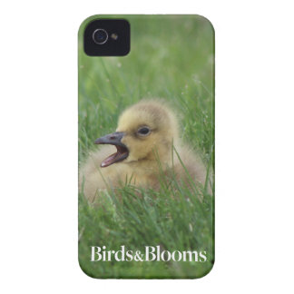 Canadian Goose Chick Case-Mate iPhone 4 Case