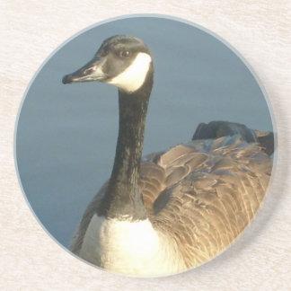 Canadian Goose Coaster