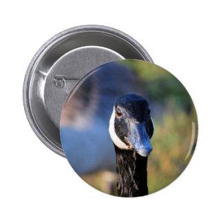 Canadian Goose Face Pinback Button