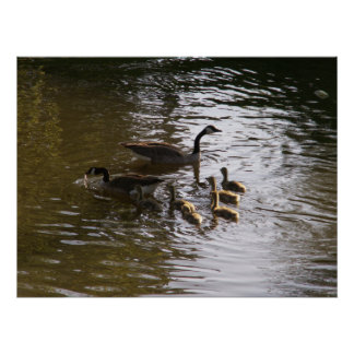 Canadian Goose Family at Winfield Lake Poster