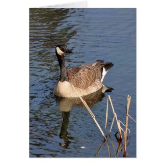 Canadian Goose - Frameable Art Card