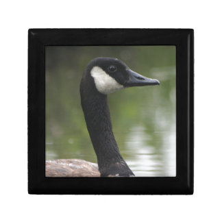 Canadian Goose Jewelry Boxes