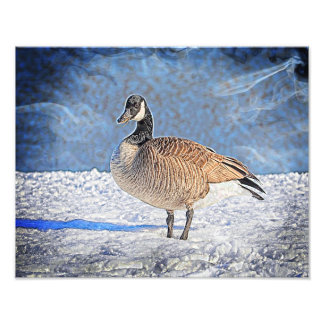 Canadian Goose in the snow Photo Print
