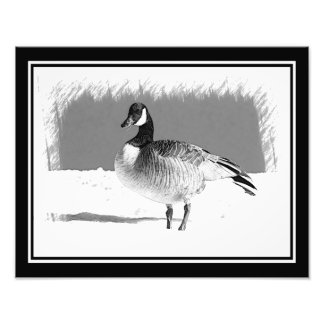 Canadian Goose in the snow Photo