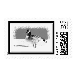 Canadian Goose in the snow Postage
