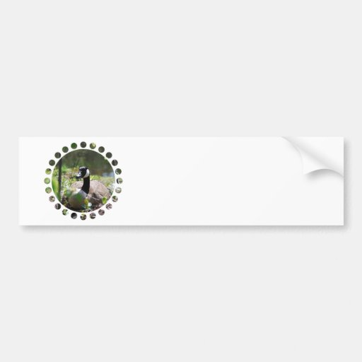 Canadian Goose Nesting Bumper Stickers