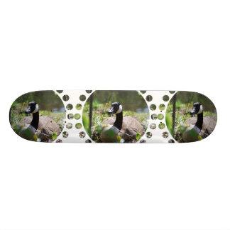 Canadian Goose Nesting Skateboard