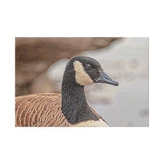 Canadian Goose Portrait Canvas Print