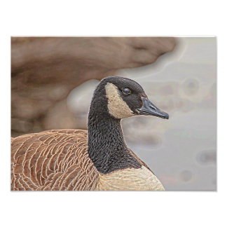 Canadian Goose Portrait Photo Print