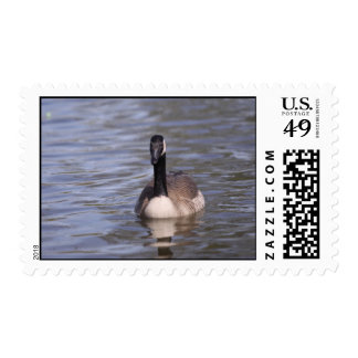 Canadian Goose Postage Stamps
