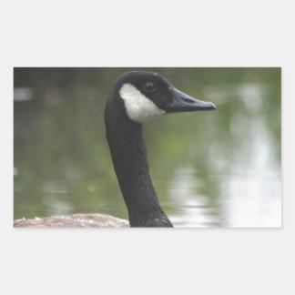 Canadian Goose Rectangular Sticker