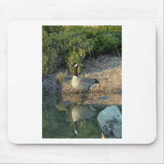Canadian Goose Reflection Mouse Pad