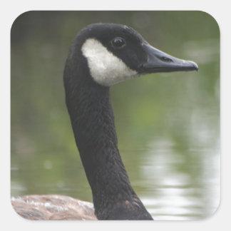 Canadian Goose Square Sticker