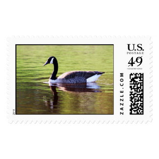 Canadian Goose Stamp