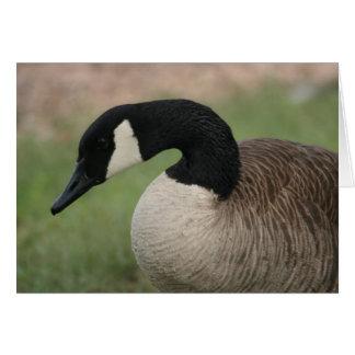 """Canadian Goose"" Wildlife Greeting Card"