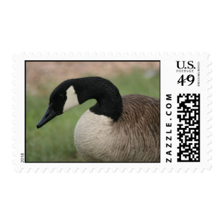 """Canadian Goose"" Wildlife Postage Stamp"