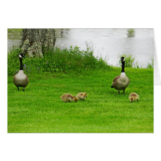 Canadian Goose with babies Card