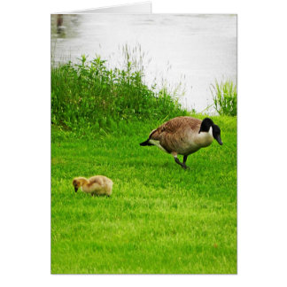 Canadian Goose with baby Card