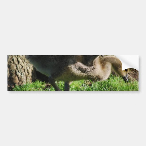 Canadian Gosling Bumper Stickers