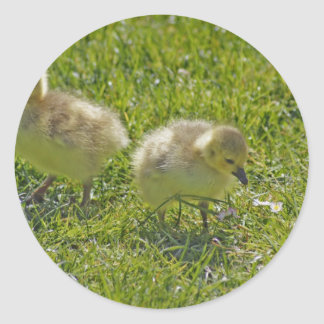 Canadian Gosling Round Stickers