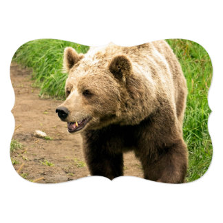 Canadian Grizzly Card