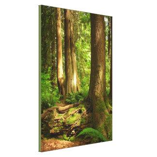 Canadian Landscape West Coast Forest Art Print
