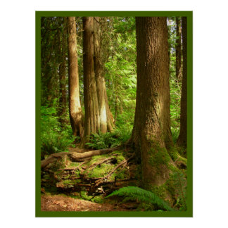 Canadian Landscape West Coast Forest Art Print