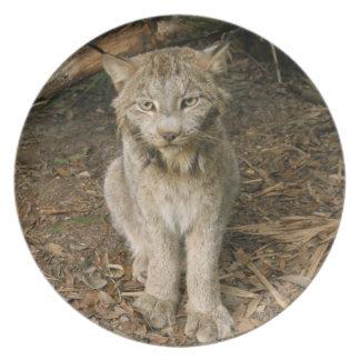 Canadian Lynx_0173 Melamine Plate