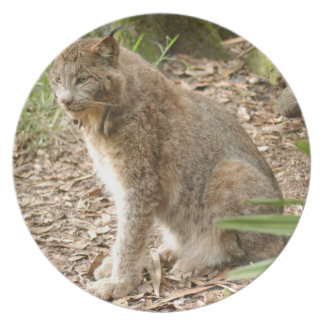 Canadian Lynx 0188e Dinner Plate