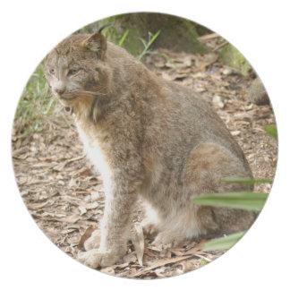 Canadian Lynx_0188e Melamine Plate