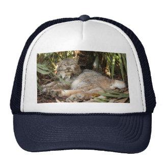 Canadian Lynx 0339e Trucker Hat