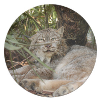 Canadian Lynx 0340 Melamine Plate