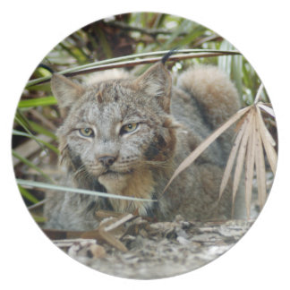 Canadian Lynx_0344e Melamine Plate